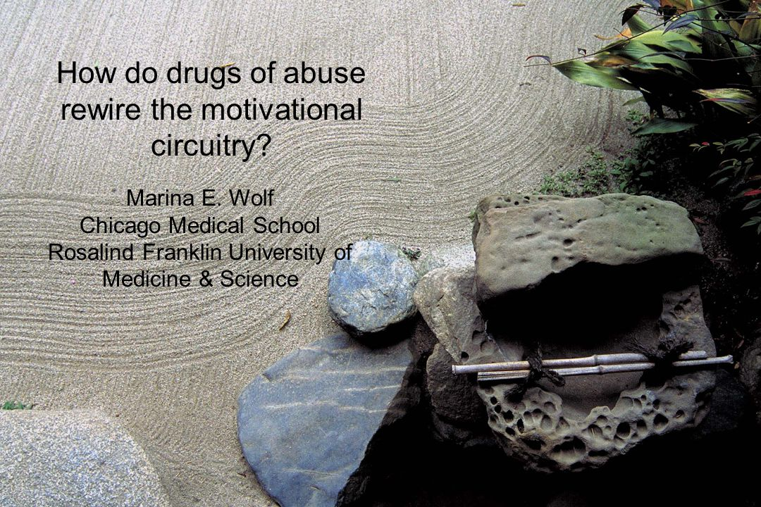 How do drugs of abuse rewire the motivational circuitry