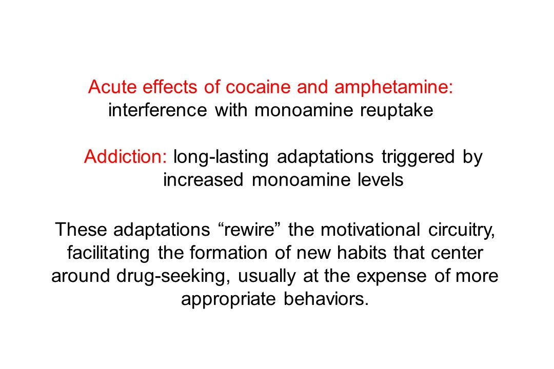 Acute effects of cocaine and amphetamine: interference with monoamine reuptake