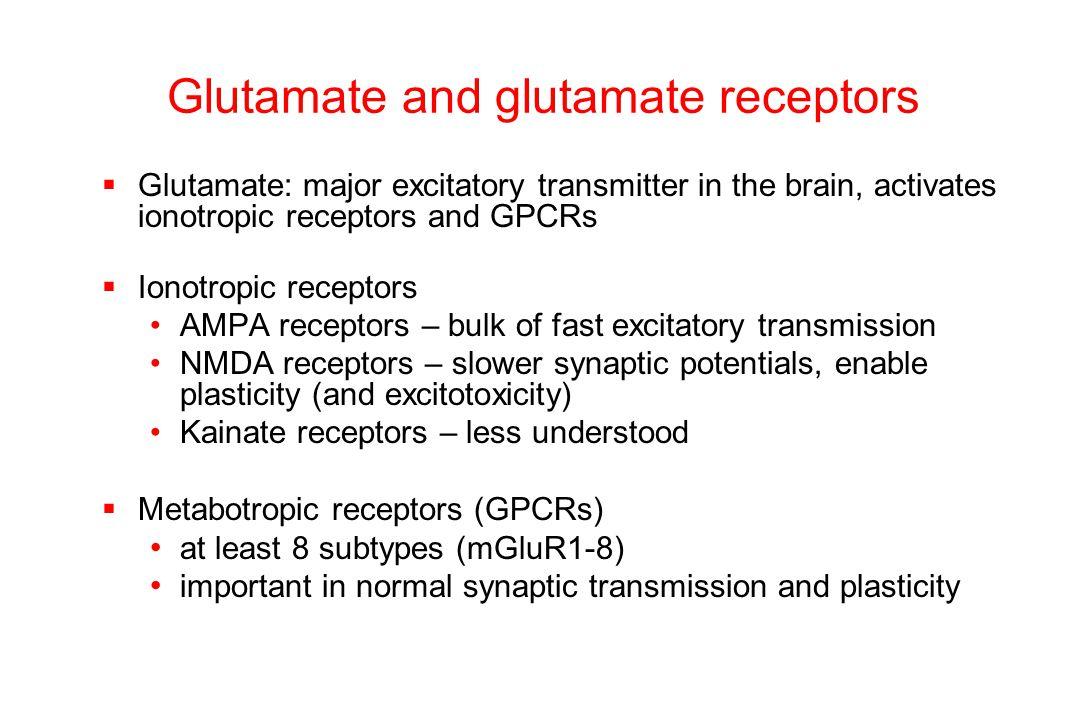 Glutamate and glutamate receptors