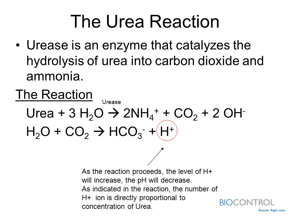 The Urea Reaction Urease is an enzyme that catalyzes the hydrolysis of urea into carbon dioxide and ammonia.