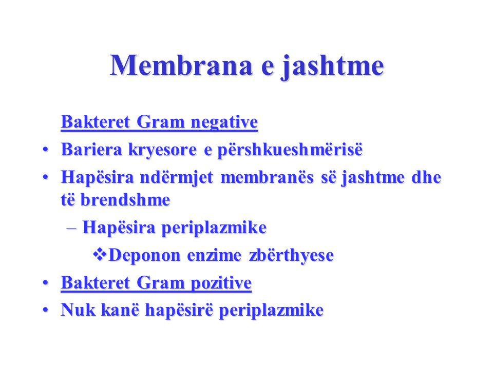 Membrana e jashtme Bakteret Gram negative