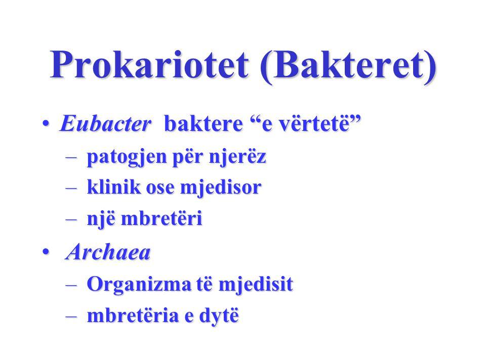Prokariotet (Bakteret)