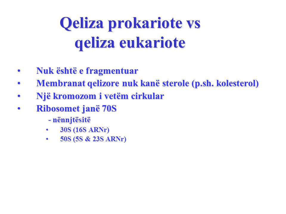 Qeliza prokariote vs qeliza eukariote