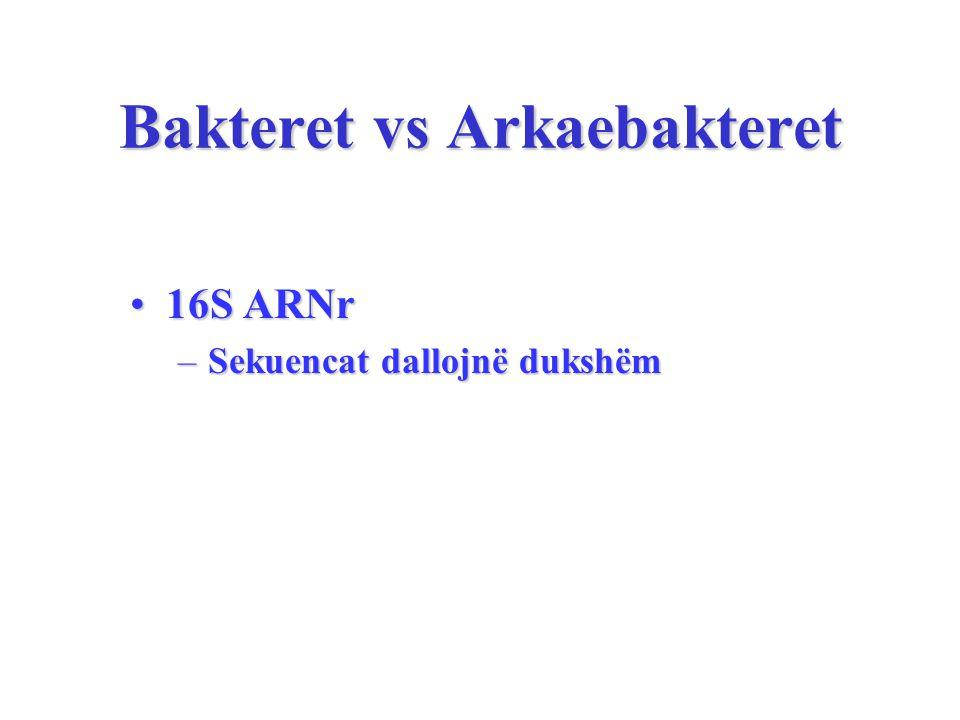 Bakteret vs Arkaebakteret