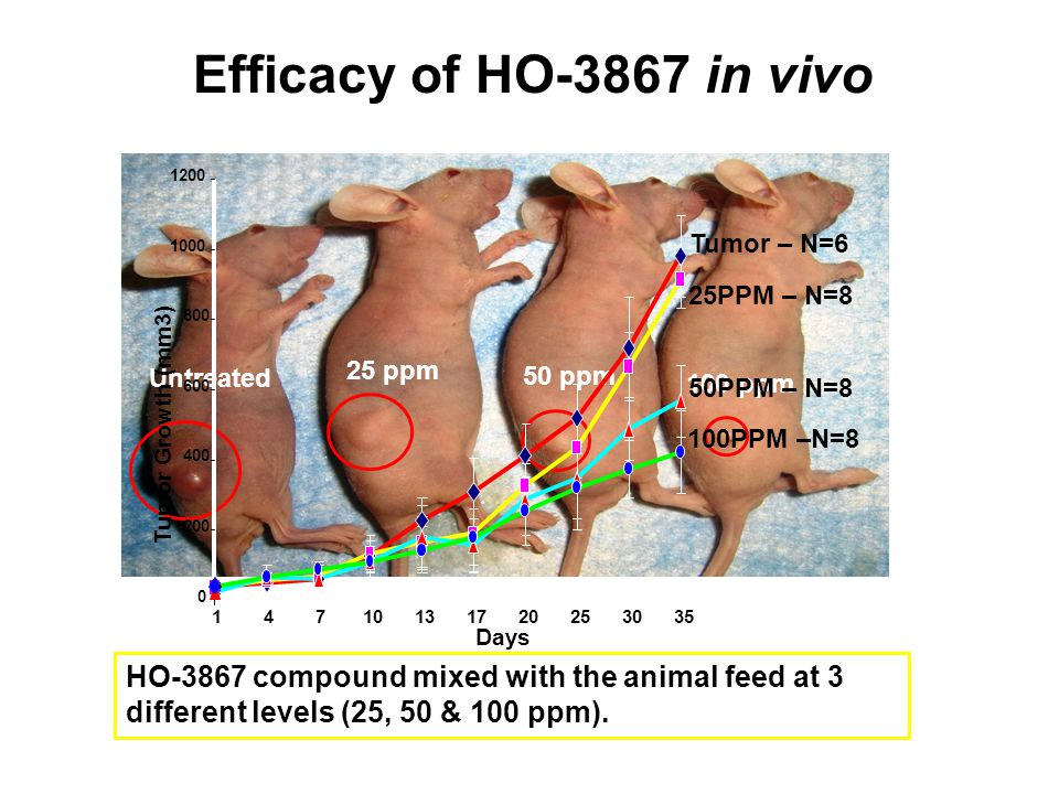 Efficacy of HO-3867 in vivo Untreated. 25 ppm. 50 ppm. 100 ppm. Days. 200. 400. 600. 800. 1000.