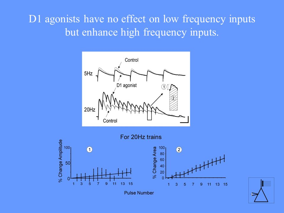 D1 agonists have no effect on low frequency inputs but enhance high frequency inputs.