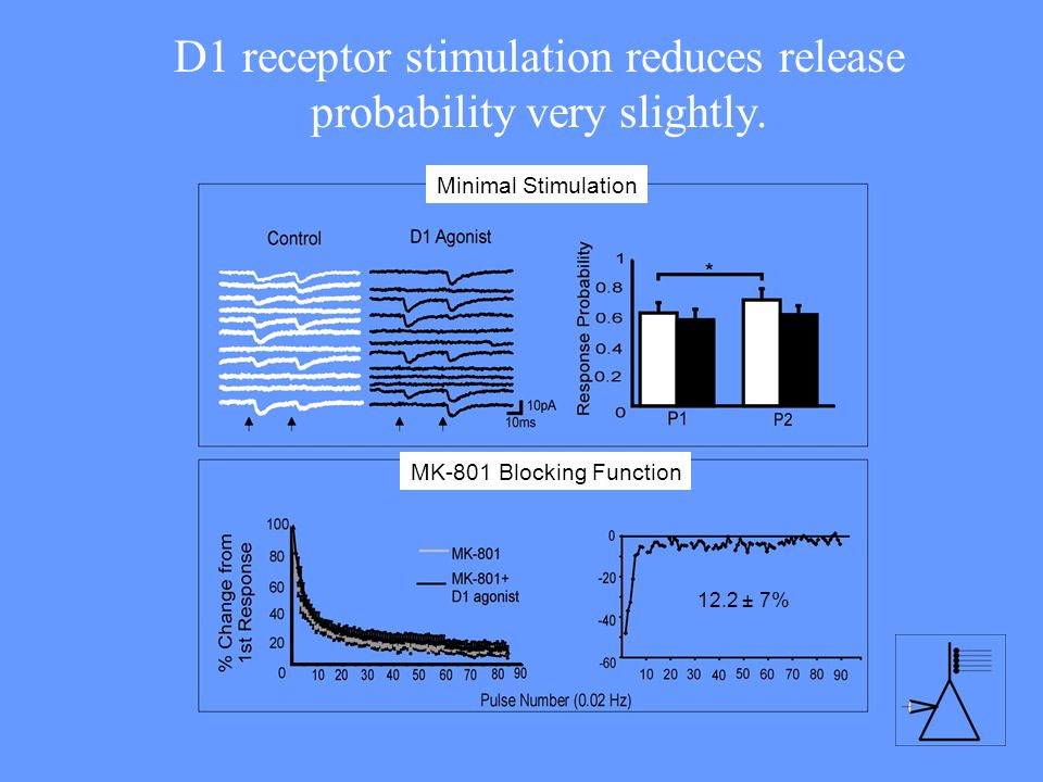 D1 receptor stimulation reduces release probability very slightly.