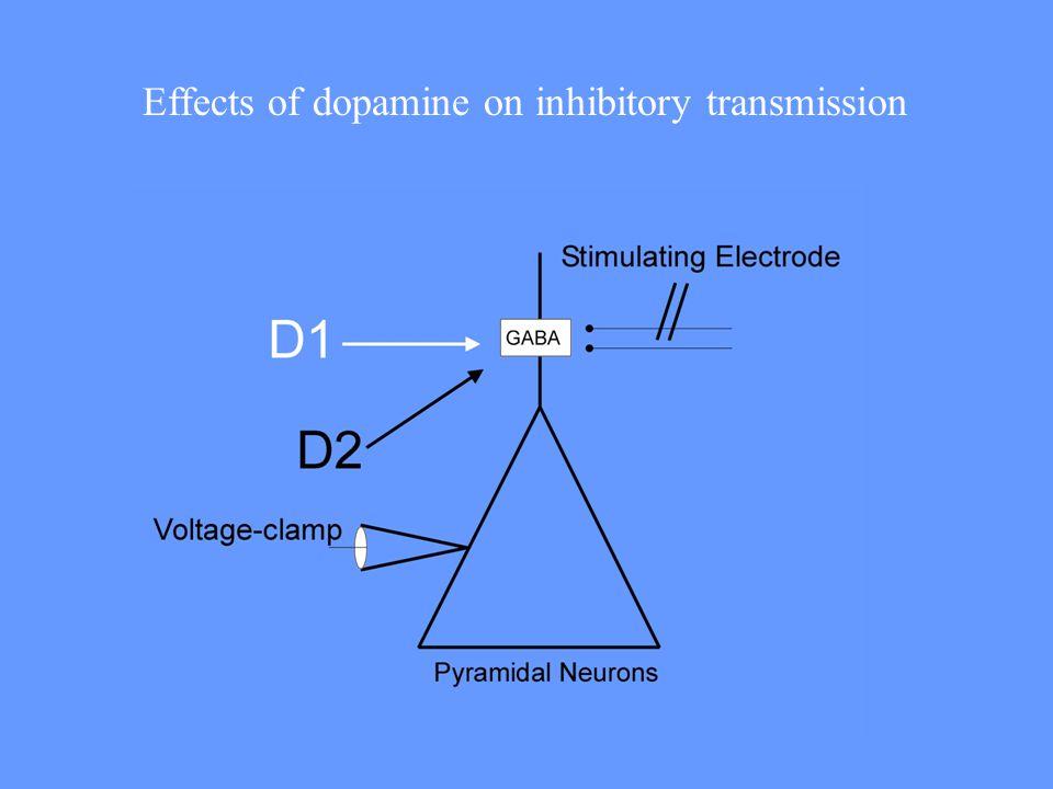 Effects of dopamine on inhibitory transmission