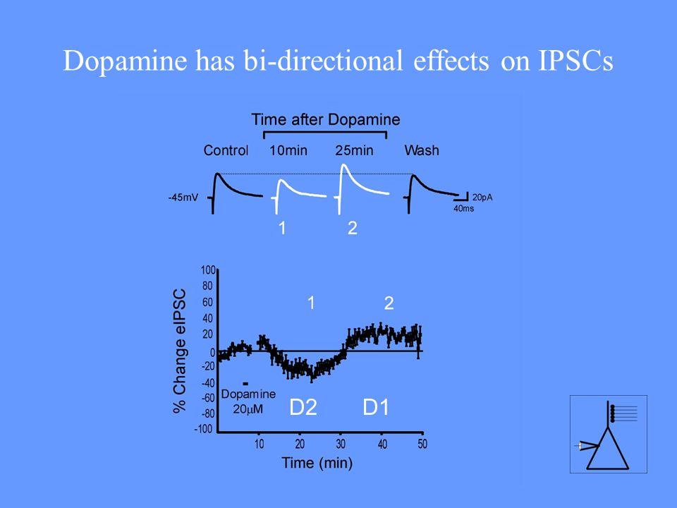 Dopamine has bi-directional effects on IPSCs