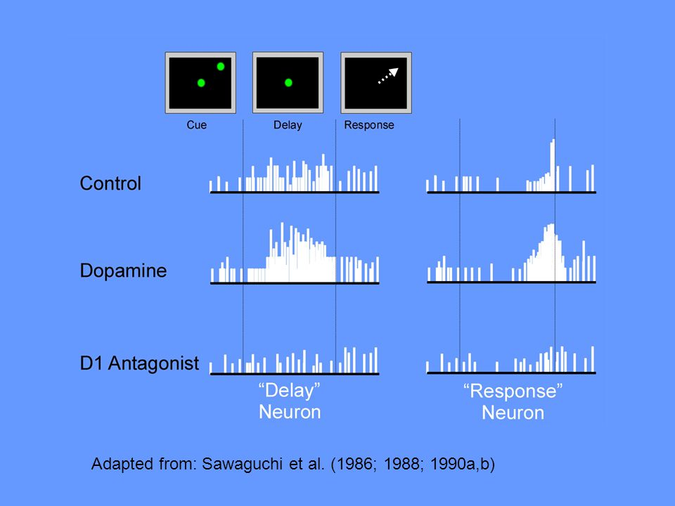Adapted from: Sawaguchi et al. (1986; 1988; 1990a,b)