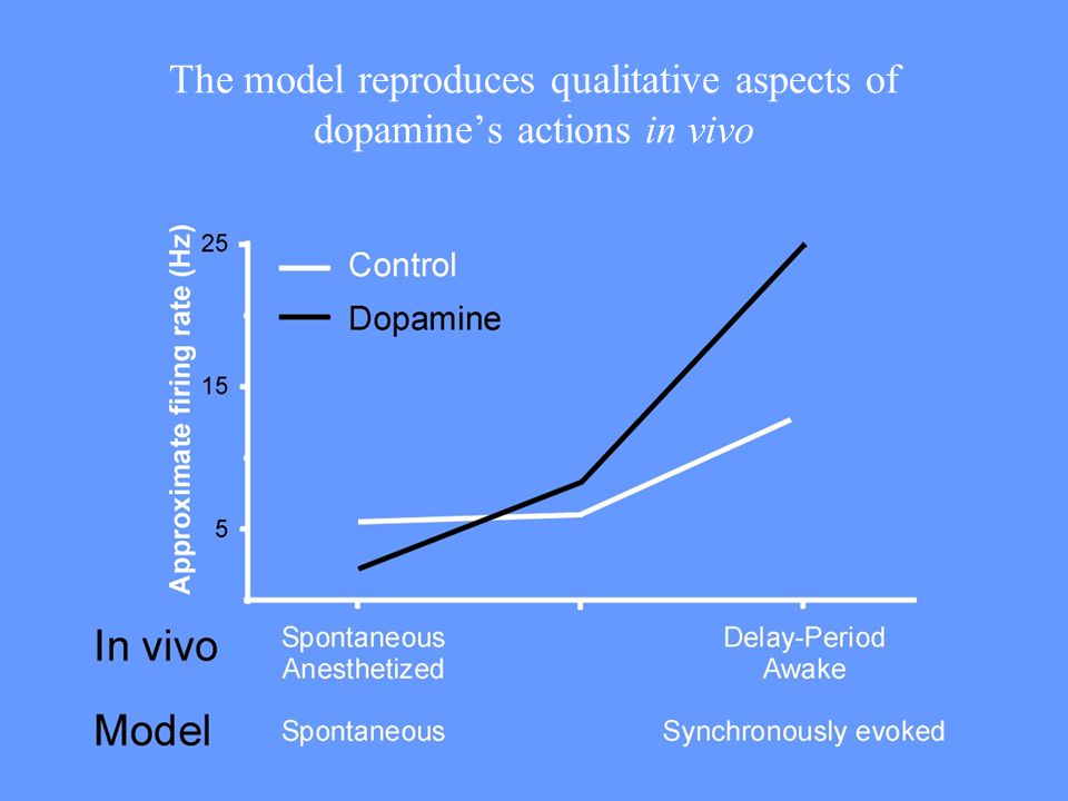 The model reproduces qualitative aspects of dopamine's actions in vivo