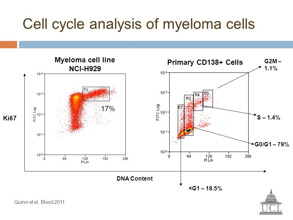 Cell cycle analysis of myeloma cells