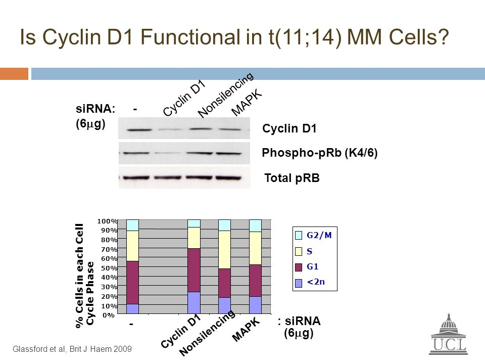 Is Cyclin D1 Functional in t(11;14) MM Cells