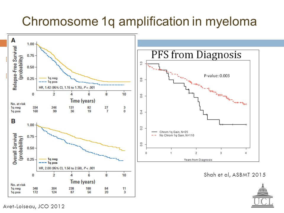 Chromosome 1q amplification in myeloma
