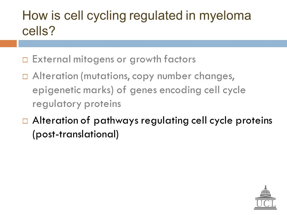 How is cell cycling regulated in myeloma cells