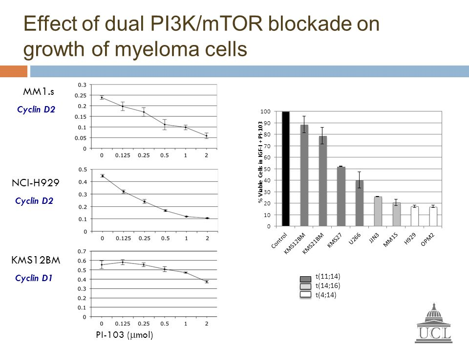 Effect of dual PI3K/mTOR blockade on growth of myeloma cells