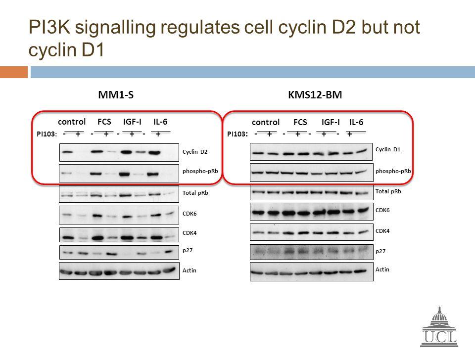PI3K signalling regulates cell cyclin D2 but not cyclin D1