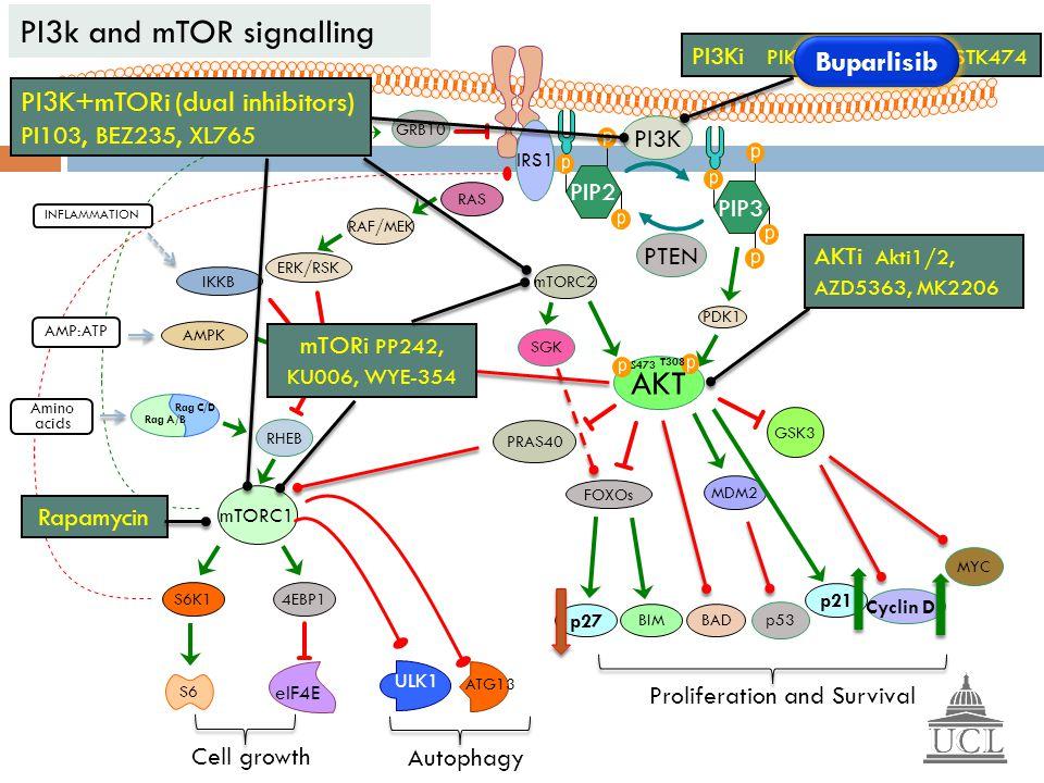 PI3k and mTOR signalling