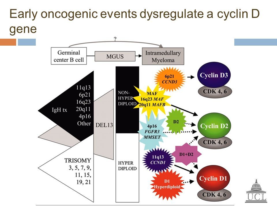 Early oncogenic events dysregulate a cyclin D gene