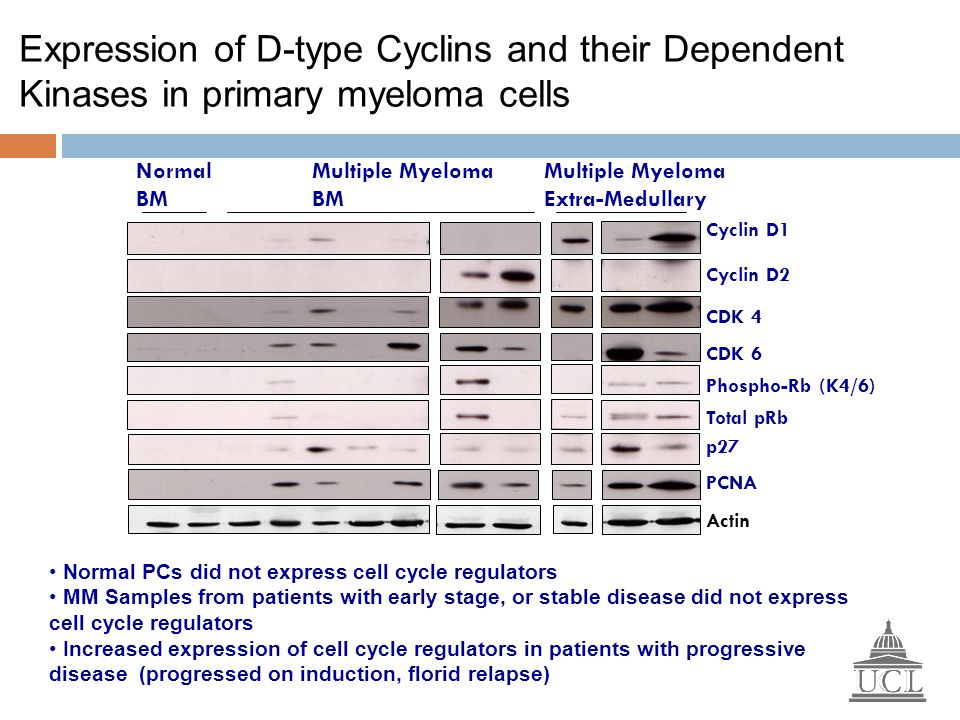 Expression of D-type Cyclins and their Dependent