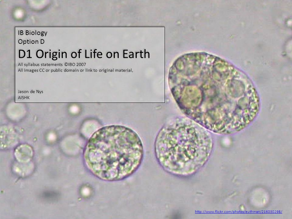 D1 Origin of Life on Earth