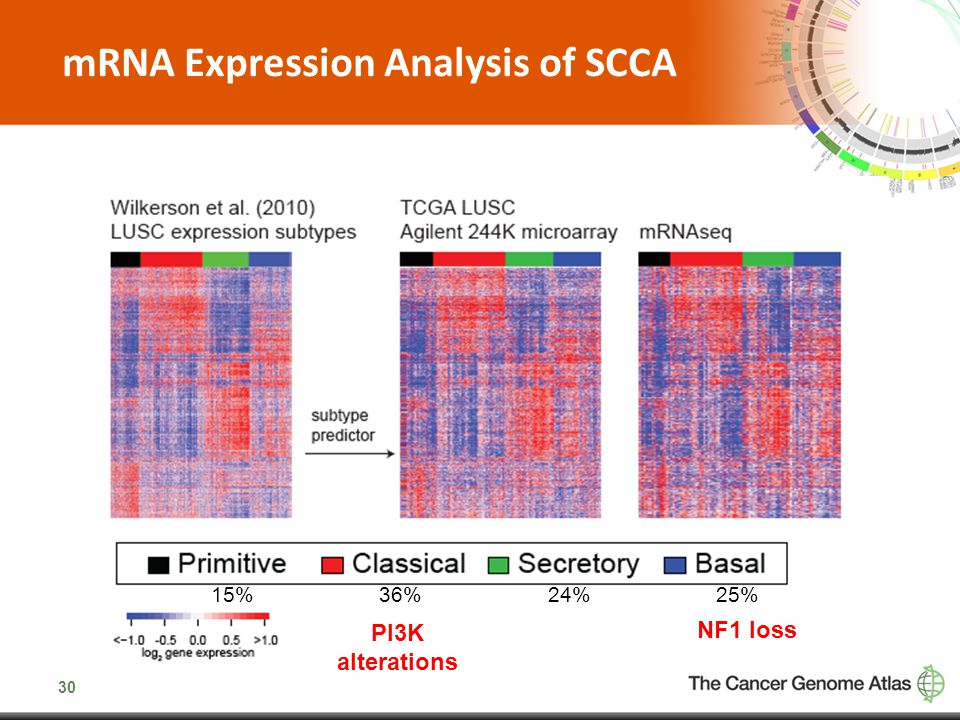 mRNA Expression Analysis of SCCA