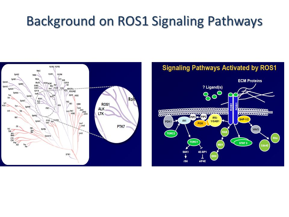 Background on ROS1 Signaling Pathways