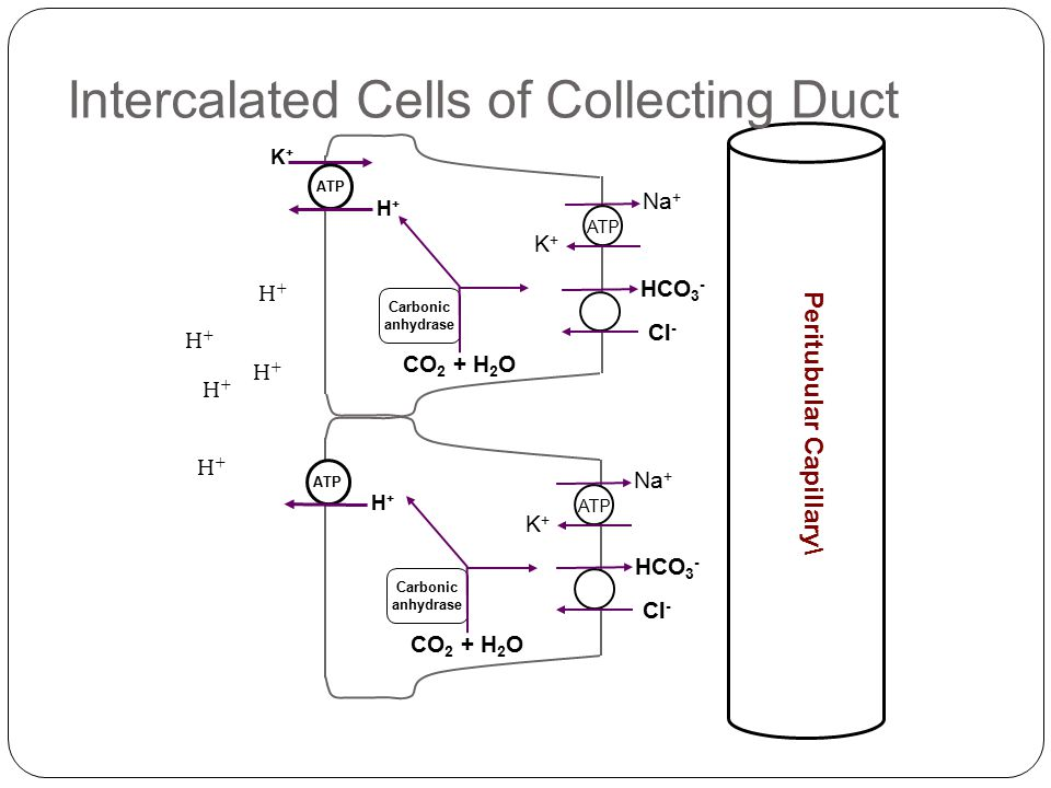 Intercalated Cells of Collecting Duct