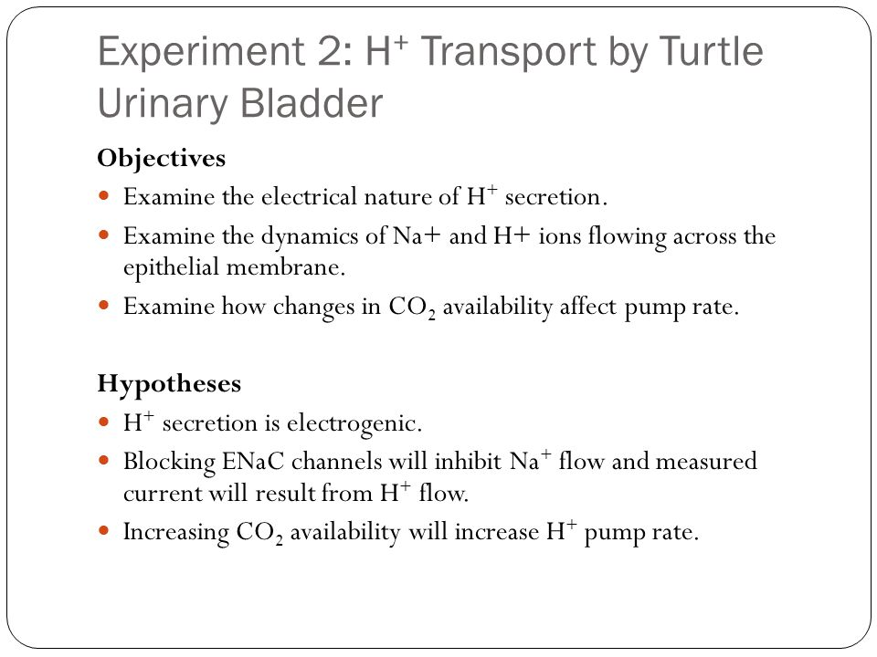 Experiment 2: H+ Transport by Turtle Urinary Bladder