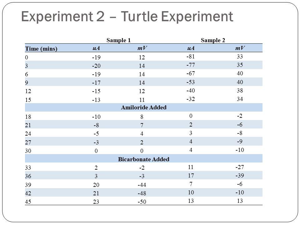 Experiment 2 – Turtle Experiment
