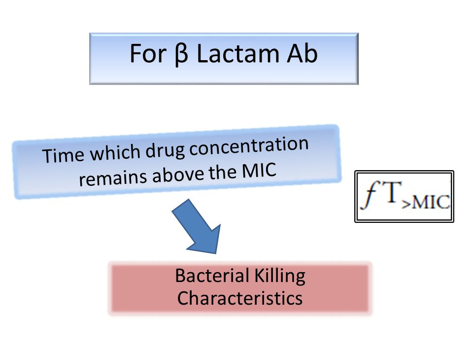 For β Lactam Ab Time which drug concentration remains above the MIC