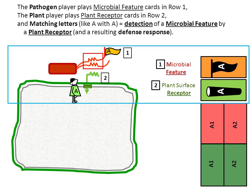 The Pathogen player plays Microbial Feature cards in Row 1, The Plant player plays Plant Receptor cards in Row 2, and Matching letters (like A with A) = detection of a Microbial Feature by a Plant Receptor (and a resulting defense response).