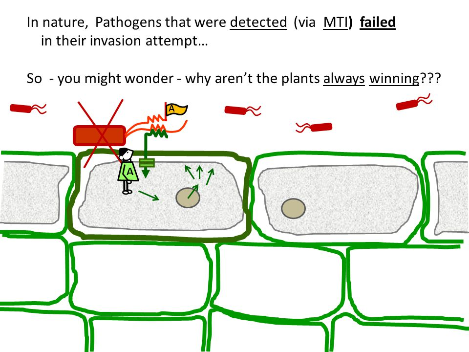 So - you might wonder - why aren't the plants always winning