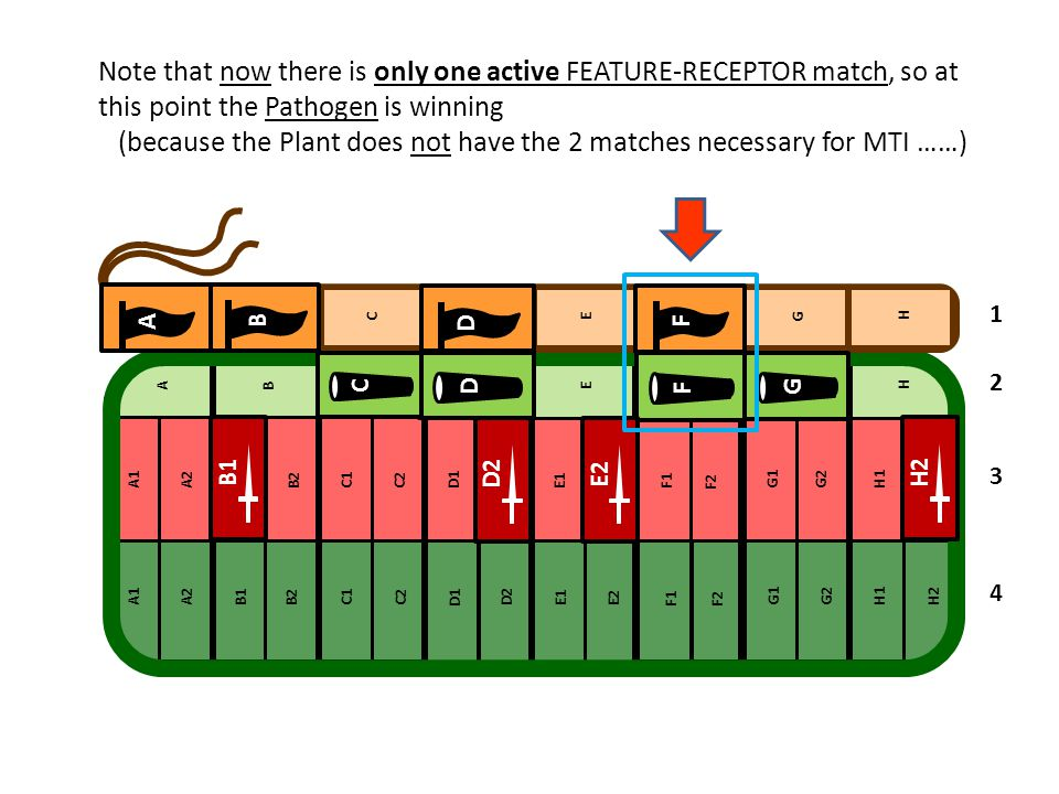 Note that now there is only one active FEATURE-RECEPTOR match, so at this point the Pathogen is winning (because the Plant does not have the 2 matches necessary for MTI ……)