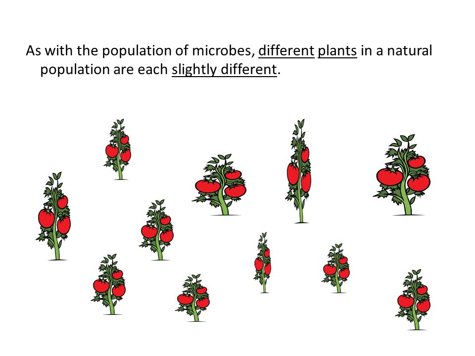 As with the population of microbes, different plants in a natural population are each slightly different.