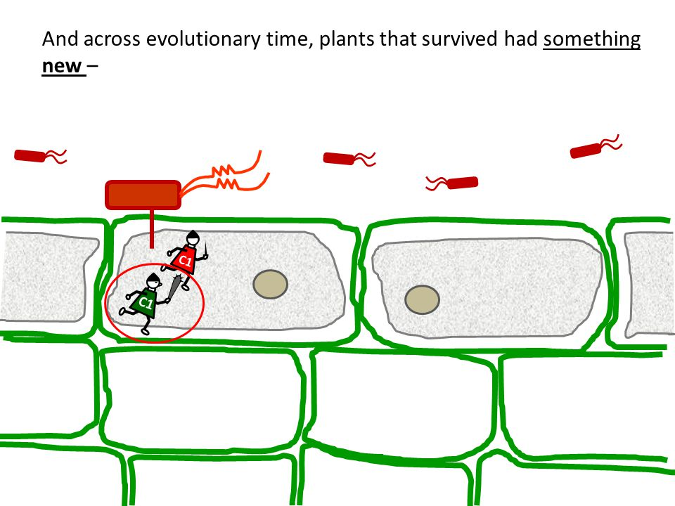 And across evolutionary time, plants that survived had something new –
