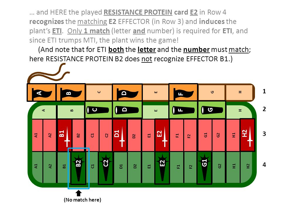 … and HERE the played RESISTANCE PROTEIN card E2 in Row 4 recognizes the matching E2 EFFECTOR (in Row 3) and induces the plant's ETI. Only 1 match (letter and number) is required for ETI, and since ETI trumps MTI, the plant wins the game!