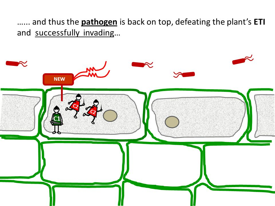 …... and thus the pathogen is back on top, defeating the plant's ETI and successfully invading…