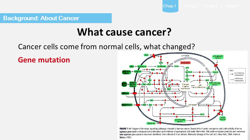 What cause cancer Cancer cells come from normal cells, what changed