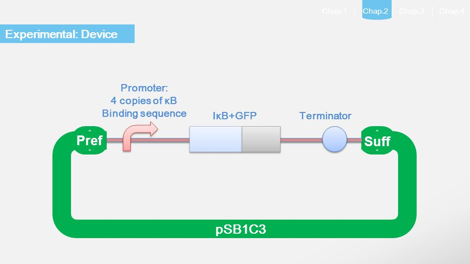 Pref Suff pSB1C3 Experimental: Device Promoter: 4 copies of κB