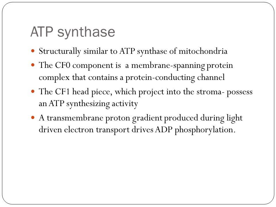 ATP synthase Structurally similar to ATP synthase of mitochondria