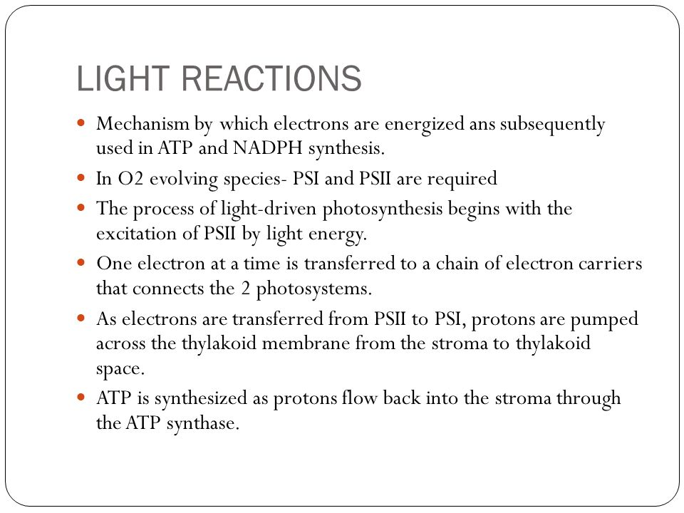 LIGHT REACTIONS Mechanism by which electrons are energized ans subsequently used in ATP and NADPH synthesis.