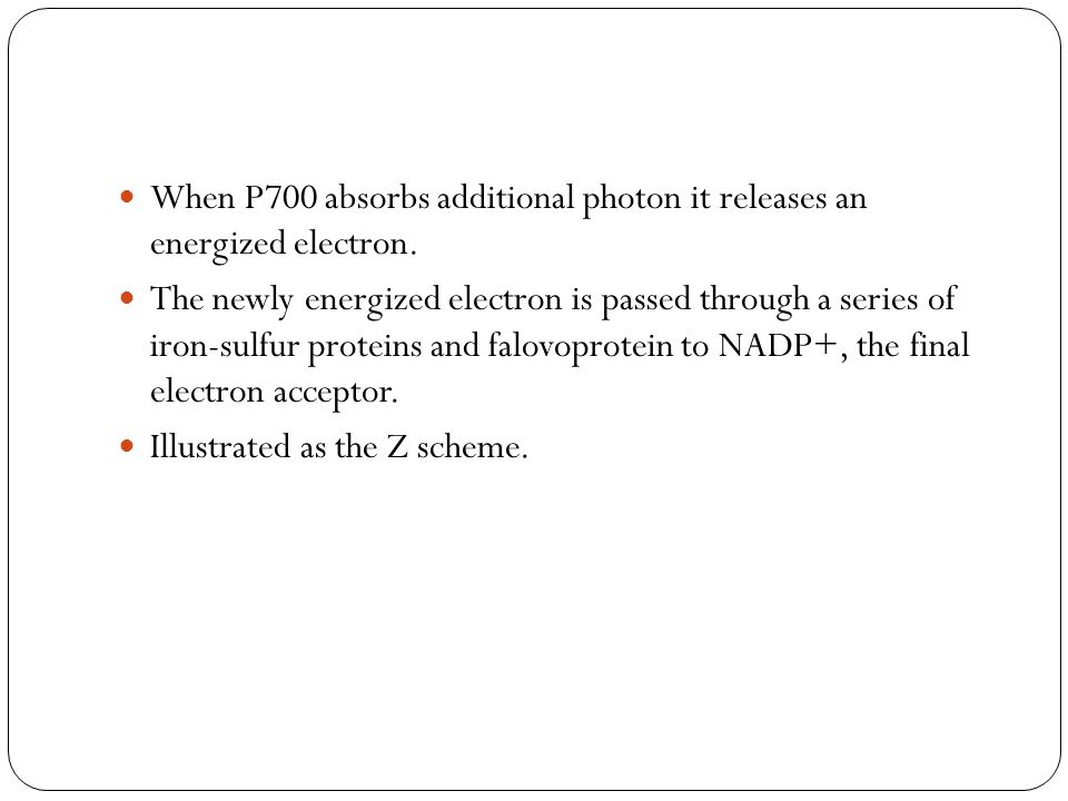 When P700 absorbs additional photon it releases an energized electron.