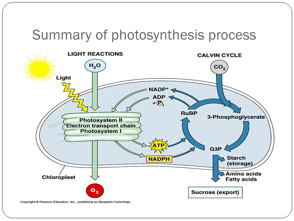 Summary of photosynthesis process