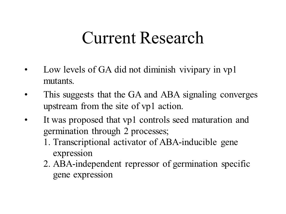 Current Research Low levels of GA did not diminish vivipary in vp1 mutants.