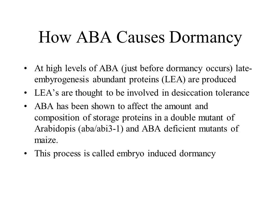 How ABA Causes Dormancy