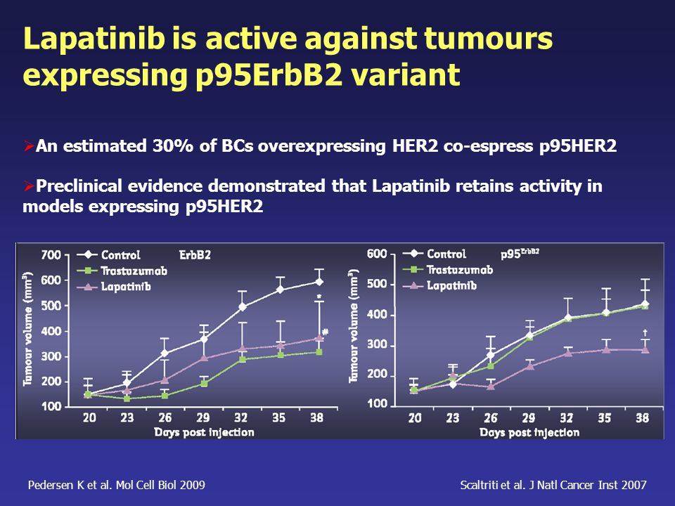 Lapatinib is active against tumours expressing p95ErbB2 variant
