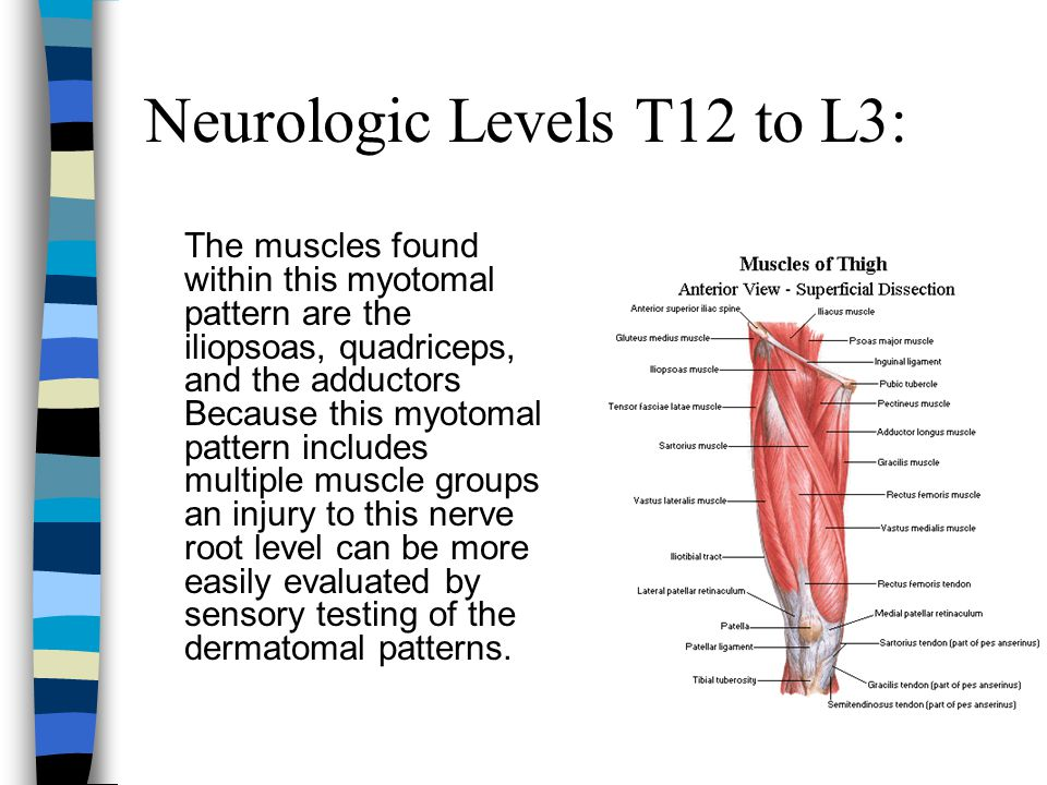 Neurologic Levels T12 to L3: