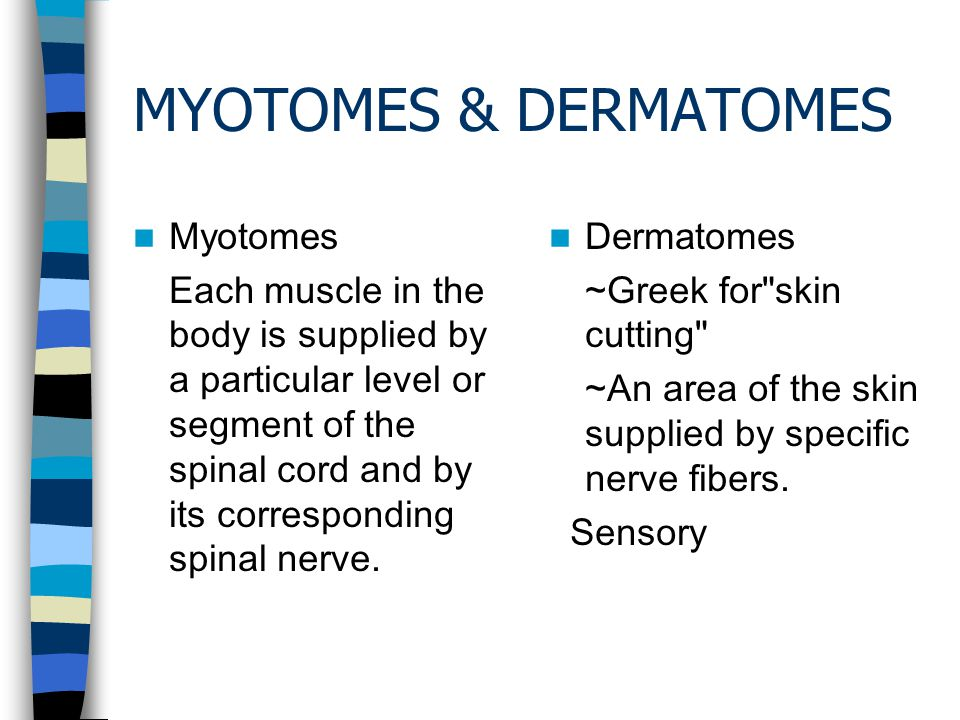 MYOTOMES & DERMATOMES Myotomes