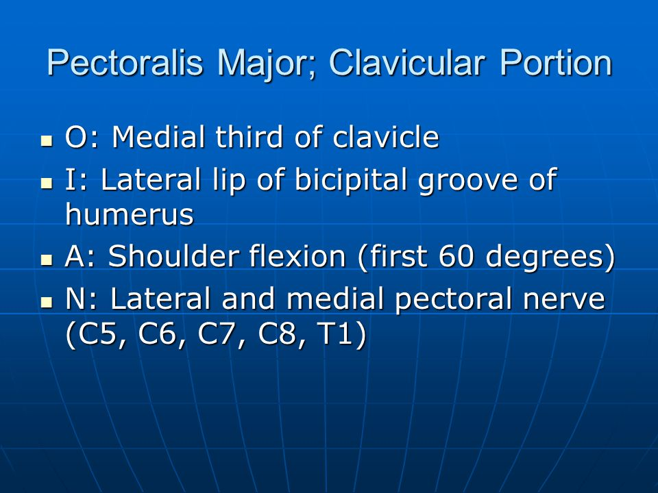 Pectoralis Major; Clavicular Portion